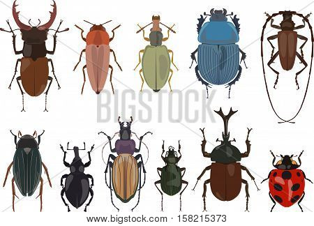 Detailed illustration bugs and beetles isolated in a flat style on white background. Collections of insects: scarab beetle stag beetle beetle rhinoceros longhorn beetle beetle bug ladybug weevil beetle.