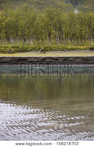 Birch trees reflecting in the river water and soil degradation of the riverbank