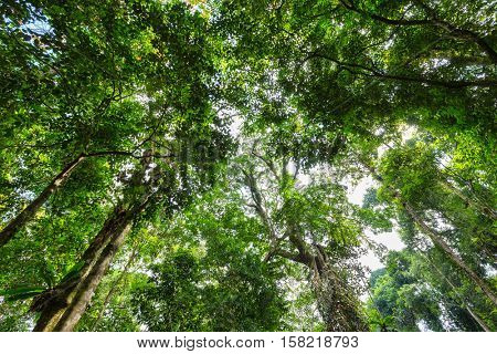 Dynamic view on a tropical forest from below