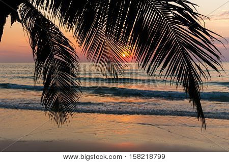 Tropical sunset behind palm tree at the khlong Chao beach in Ko Kood island, Thailand