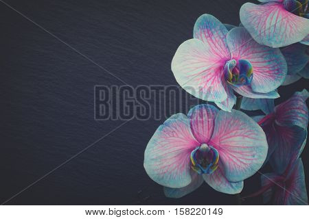 Bunch of blue orchids on black background with copy space, retro toned