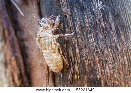 Close-Up Image Of Cicada Shell On Tree.