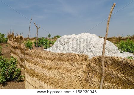 Harvested cotton being piled up high in traditional reed stockage under the blue African sky in Benin.