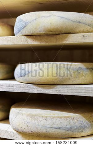 Aging Cheese At The Maturing Cellar Franche Creamery Comte