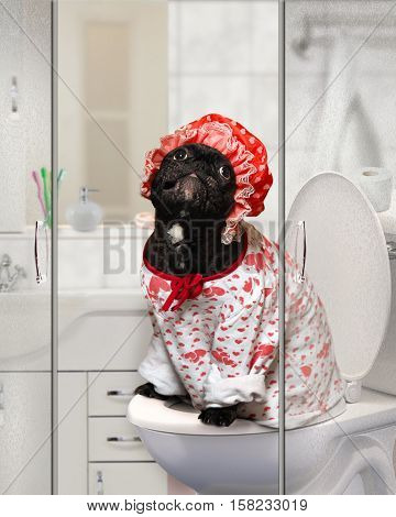 Funny Dog in a shower cap and pajamas sitting on the toilet in the bathroom. Concept - pet toilet training cleanliness and care of the pets