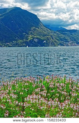 Botanical Garden At Promenade In Lugano In Ticino Switzerland