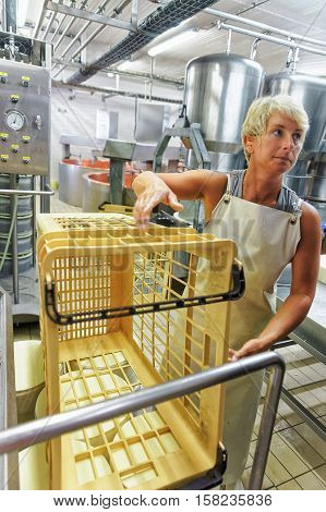 Cheesemaker Working At The Dairy In France