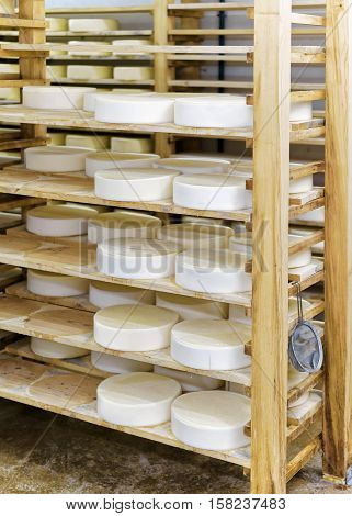 Comte Young Cheese At Maturing Cellar Franche Creamery