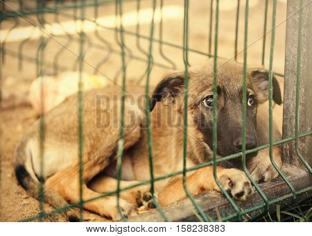 Little homeless puppy in animal shelter cage