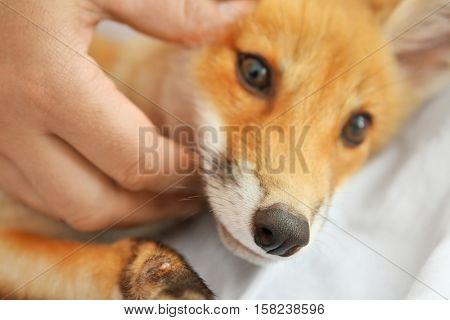 Portrait of cute little fox cub, close up
