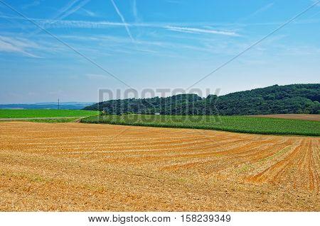 Field At Yverdon In Jura Nord Vaudois Vaud Switzerland