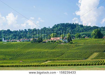 Fields In Swiss Village In Yverdon Les Bains In Switzerland