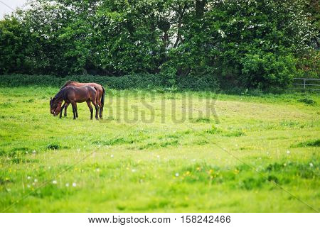 Horse Eating Grass In The Meadow In Brecon Beacons