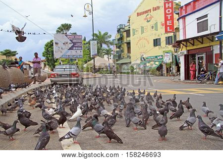 Malacca Malaysia - April 10 2015: people are watching the pigeons outdoor in Malacca Malaysia
