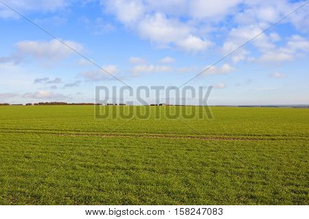 Extensive Wheat Crop