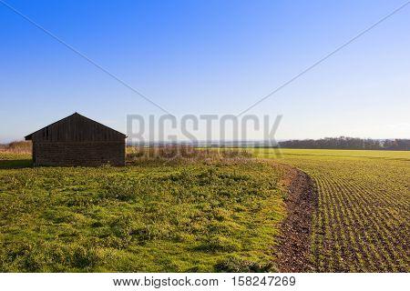 Barn And Wheat Crop