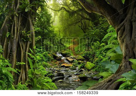 Tropical jungle with river, old trees and mist at dawn