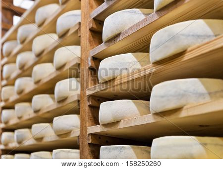 Pile Of Aging Cheese At Maturing Cellar Creamery Franche Comte