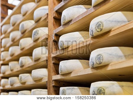 Pile Of Aging Cheese In Maturing Cellar Creamery Franche Comte