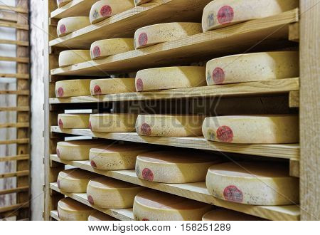 Rack Of Aging Cheese In Maturing Cellar Franche Comte Creamery