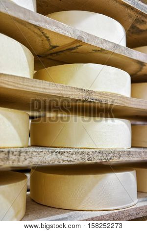 Row Of Aging Cheese In Maturing Cellar Franche Comte Creamery