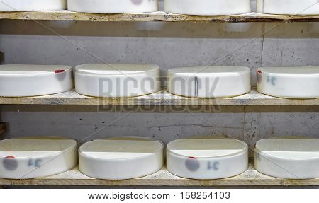 Shelves Of Young Cheese At Maturing Cellar Franche Comte Creamery