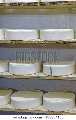 Shelves Of Young Cheese At Ripening Cellar Franche Comte Creamery