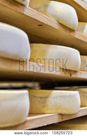 Stack Of Aging Cheese At Maturing Cellar Creamery Franche Comte