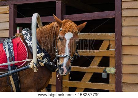 Horse harnessed with a yoke on the neck