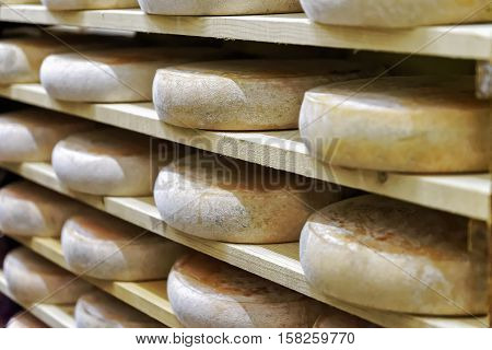 Wheels Of Aging Cheese In Ripening Cellar Franche Comte Creamery