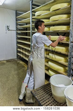 Worker In Ripening Cellar With Aging Conte Cheese In Dairy