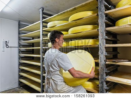 Worker Removing Aging Comte Cheese At Ripening Cellar In Dairy