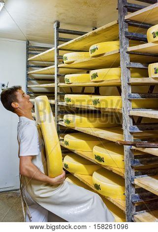 Worker Removing Aging Comte Cheese At Ripening Cellar In Creamery