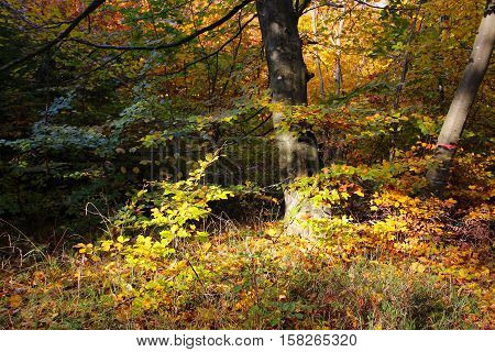 The sun illuminates fall colors up in November