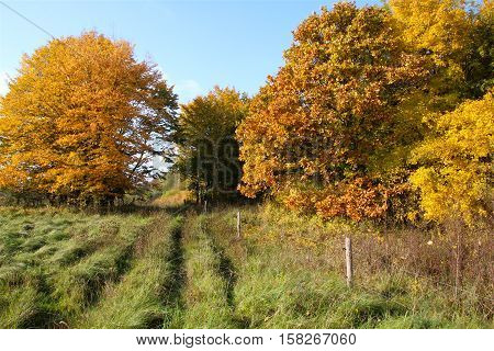 The ruts of beautiful colors in October