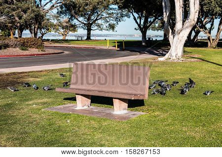 Cement park bench with pigeons in the Chula Vista Bayfront park.