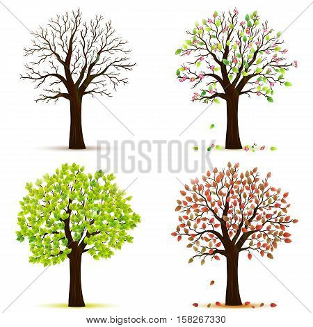 Four seasons trees on white background vector