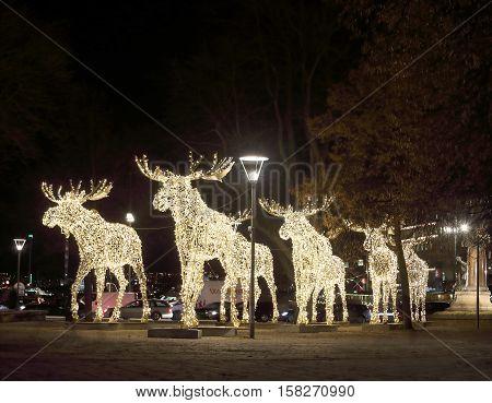 Herd of Christmas moose made of led light Nybrokajen Stockholm Sweden