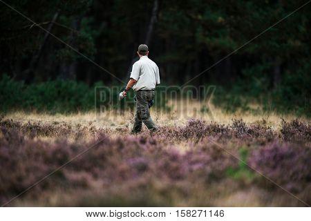 Forester Spreading Food For Red Deer In Rutting Season. National Park Hoge Veluwe.