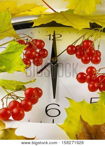 6 o'clock. Clock face with yellow leaves and red ripe viburnum. Autumn time.