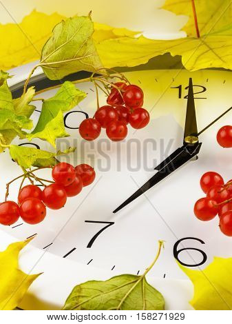 7 o'clock. Clock face with yellow leaves and red ripe viburnum. Autumn time.