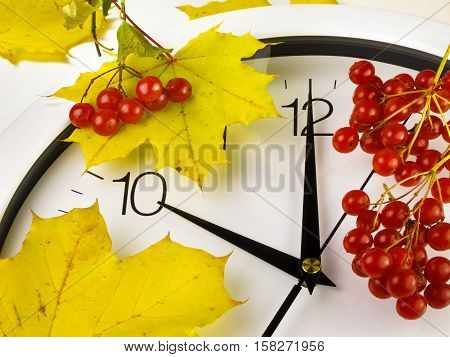 10 o'clock. Clock face with yellow leaves and red ripe viburnum. Autumn time.