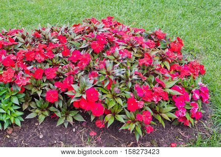 Red Flowers In Flower Bed