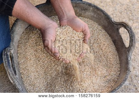 Rice and handsPals Girona province Catalonia Spain