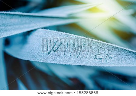 The word winter written on a frozen grass leaf on a cold morning. Toned to blue color to emphasize contrast