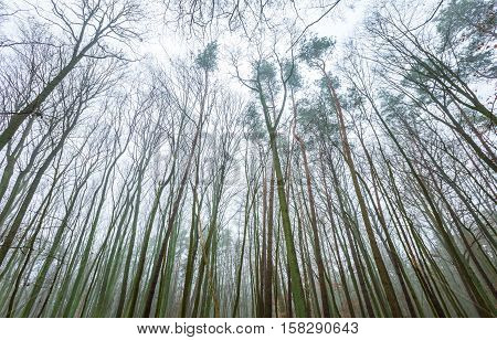 Wide View Of Withered Tree Tops