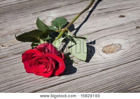 Red rose on wooden floor