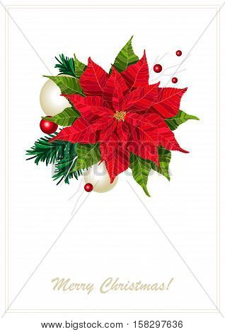 Red poinsettia flower realistic vector illustration postcard, Christmas and new year flower