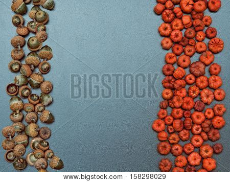 Closeup still life heap of tiny red and orange pumpkin pods and acorns. Autumn Fall Halloween concept. Grungy frame banner background with copy space for text.