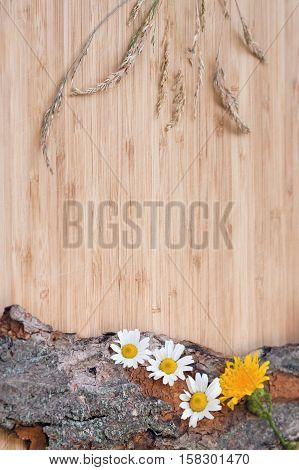 Closeup of yellow dandelion and white camomile flowers with stems and green leaves with a bunch of spikelets on old wooden bark with rough texture background on a light wooden board card copy space